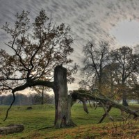 Vitalität Alter Baum