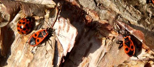 Lebendige Soziologie Käfer