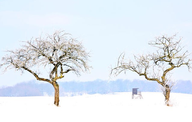 Leben-Philosophie-Baum
