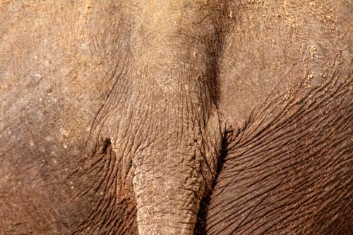 Menschen im Zoo Elefant