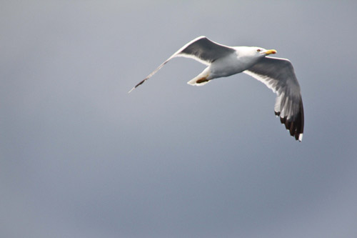 Hobbes Angst Potential fliegen