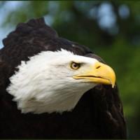 Ziele Adler