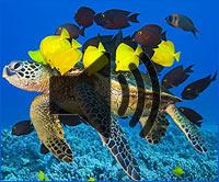 Ziele Meeresschilkröte - eine kleine Geschichte