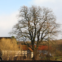 Emmenhausen Eiche