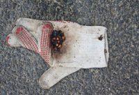 Nähe-Handschuh-Ingo-Diedrich