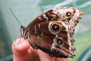 Nähe-Schmetterling-Ingo-Diedrich