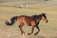 Unwillkürlichkeit-Ordnung-Leben-Pferd