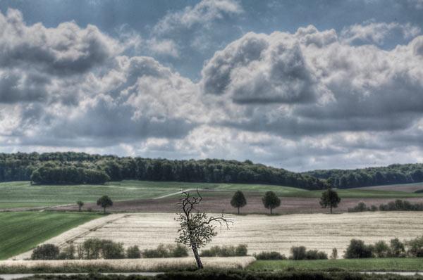 Unwillkürlichkeit-Ordnung-Landschaft
