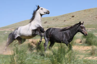 Und sie erkannten sich-Pferde-Ingo-Diedrich
